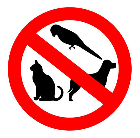 Image result for no pets